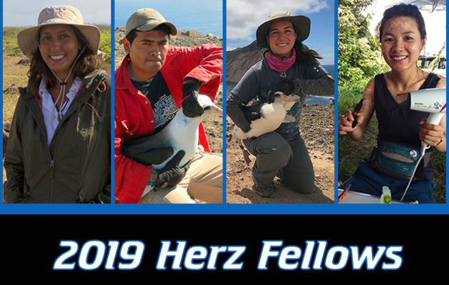 Herz International Seabird Fellowship