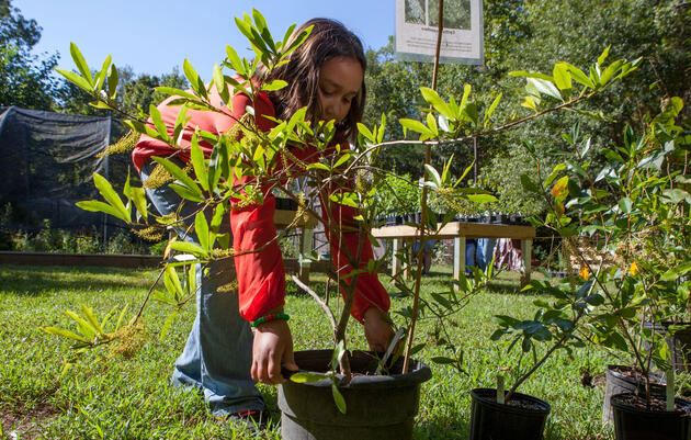 So You Have Your List of Native Plants. Now what?