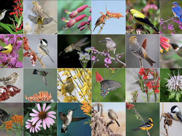 Why Native Plants Are Better for Birds and People
