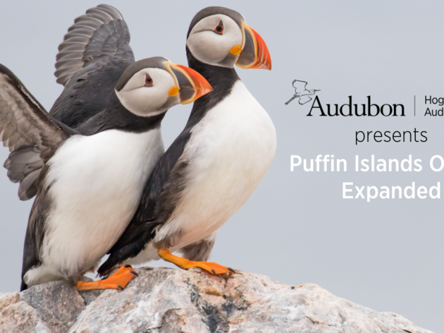 Puffin Islands Online Expanded