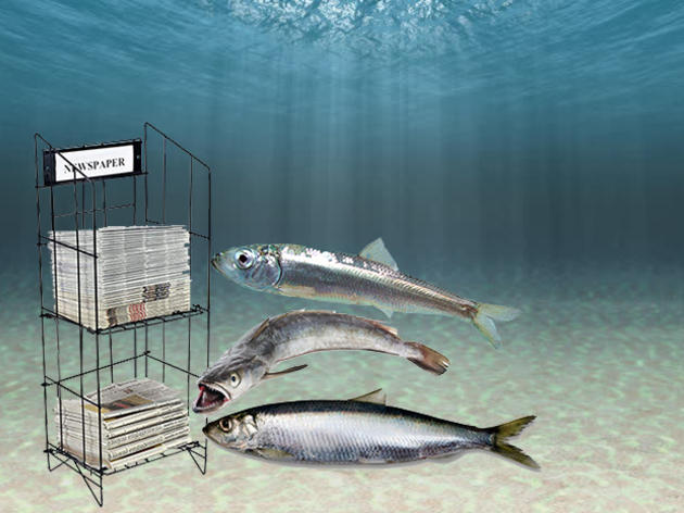 Forage Fish in the News