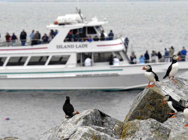 Puffin Tours