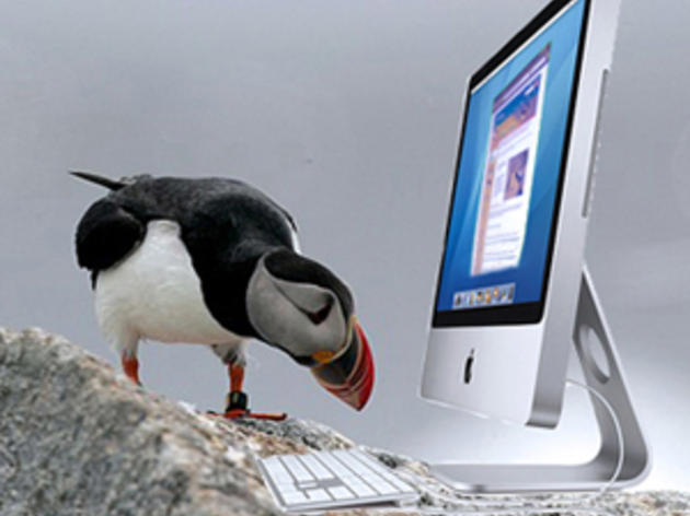 Seabirds in the News
