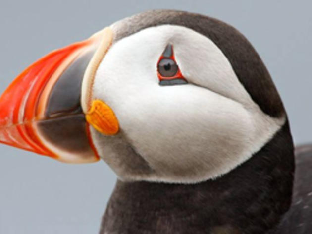 Donate to Project Puffin