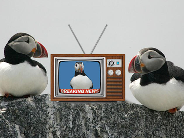 Project Puffin in the News