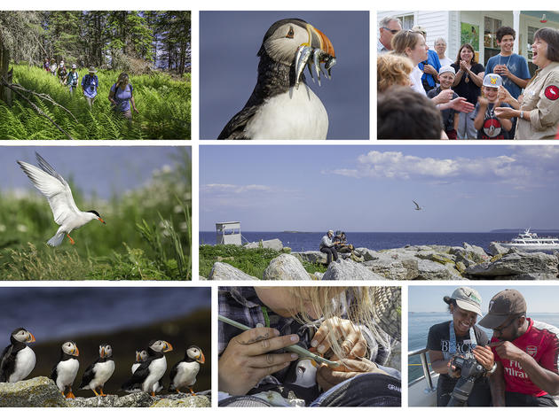 Our 2019 Work: The Seabird Restoration Program in Action