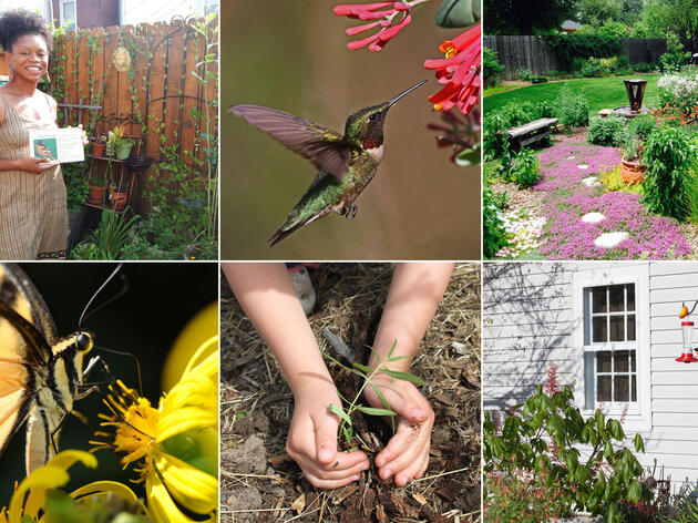 How to Make Your Yard Bird-Friendly
