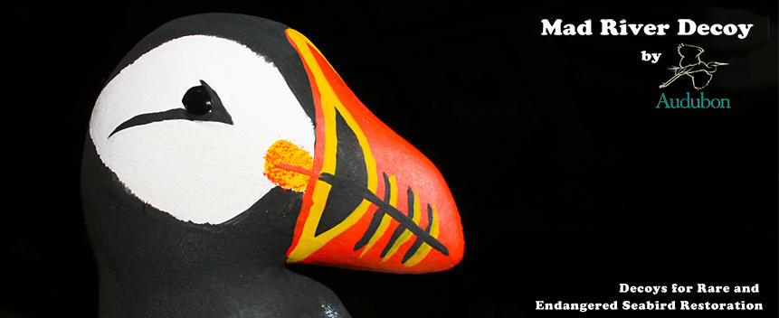 Mad River Decoy Puffin Photo with Logo