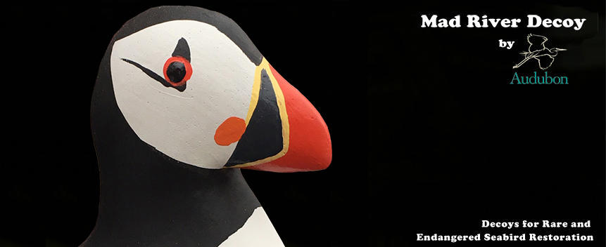Mad River Decoy Puffin Photo New with Logo