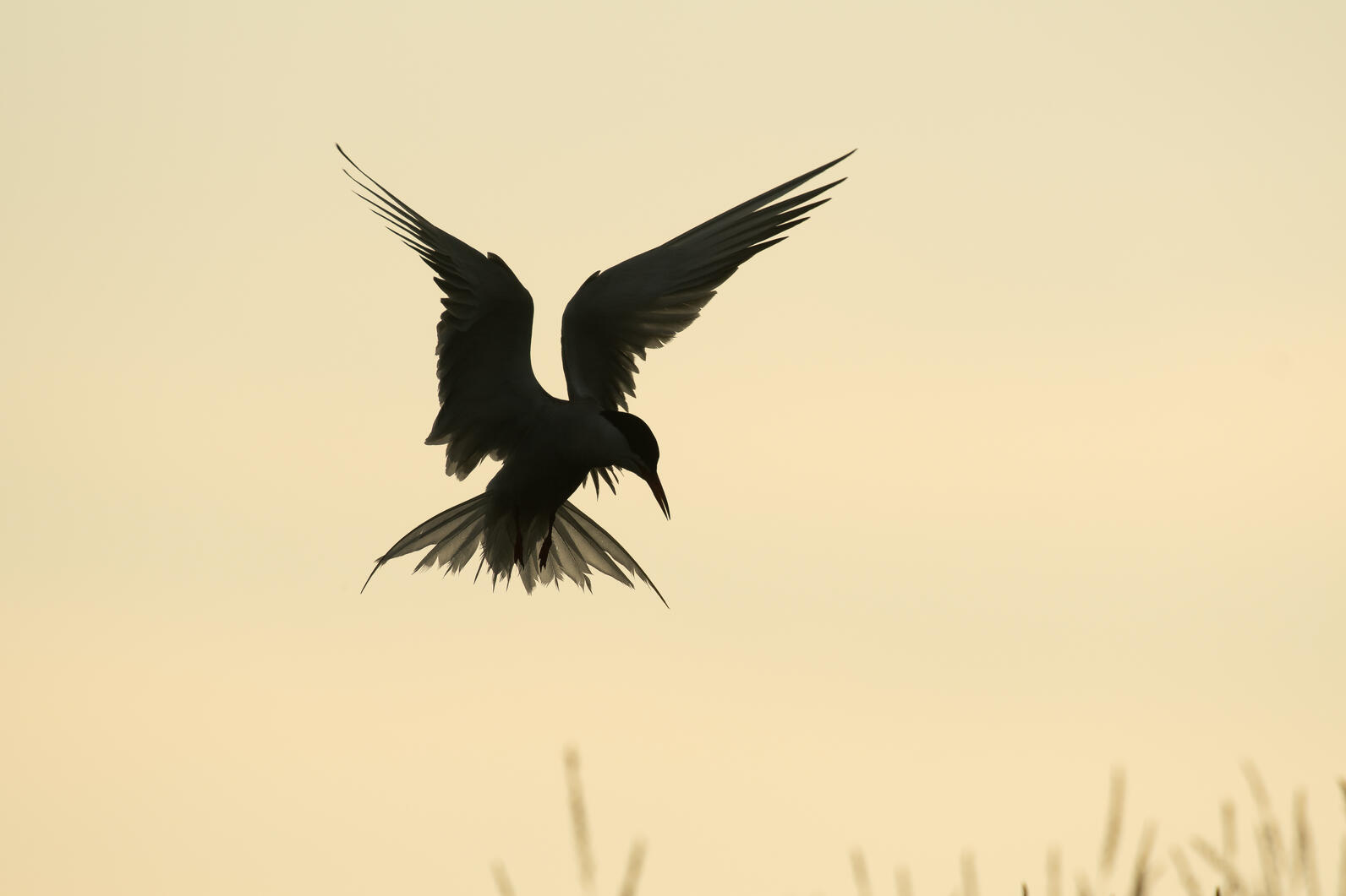 Some Gulf of Maine Seabirds have begun their winter migrations.