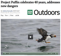 Bangor Daily News Project Puffin's 40th Article