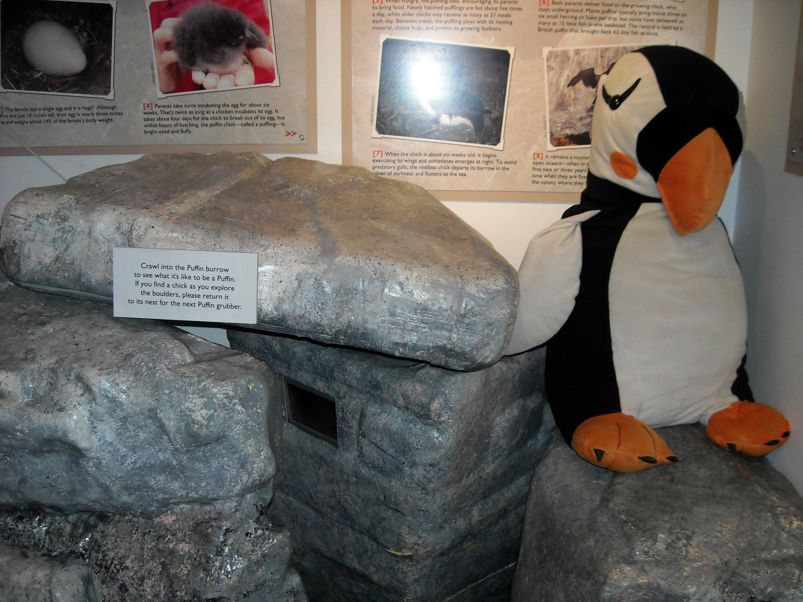 Puffin Burrow Display at PPVC