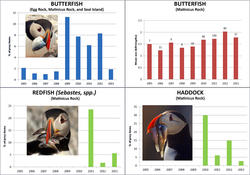 Egg Rock Update 2013 Fish Graphs from Matinicus Rock
