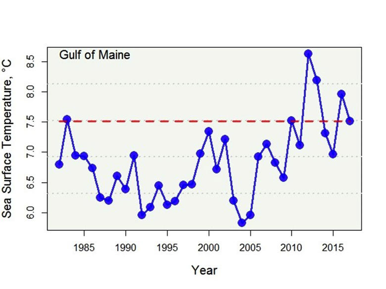 Gulf of Maine Sea Surface Temperature