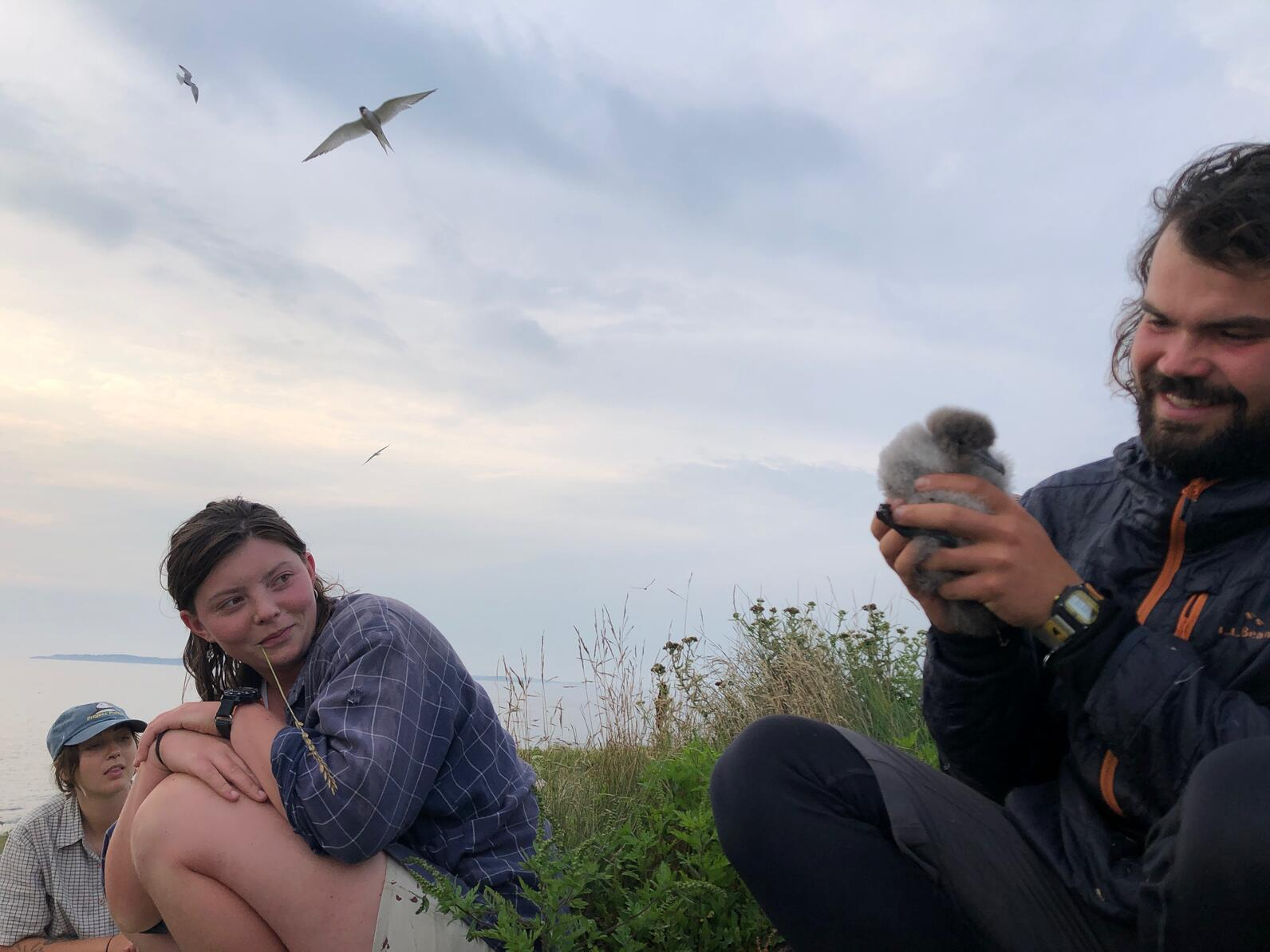 Matinicus Rock researchers with Manx Shearwater chick
