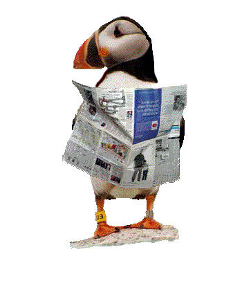 News Puffin Cropped