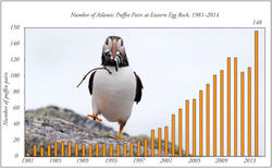 Number of Atlantic Puffin Pairs at Eastern Egg Rock Island 1981