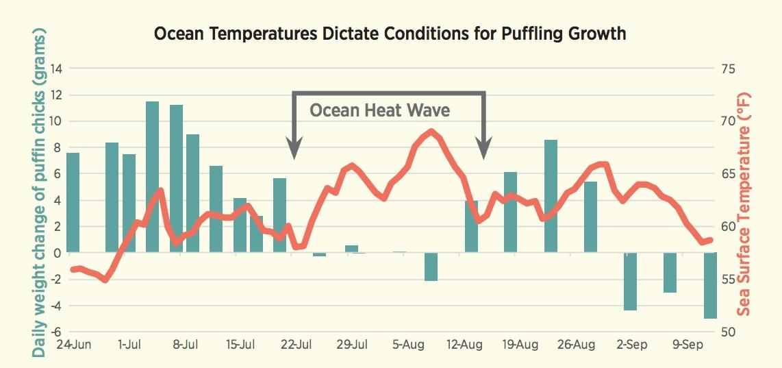 Ocean Temperatures Dictate Conditions for Puffling Growth 2018