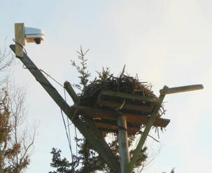 Osprey Nest Platform with Nest Cam