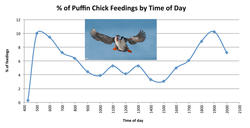 Percent of Puffin Chick Feedings by Time of Day Graph