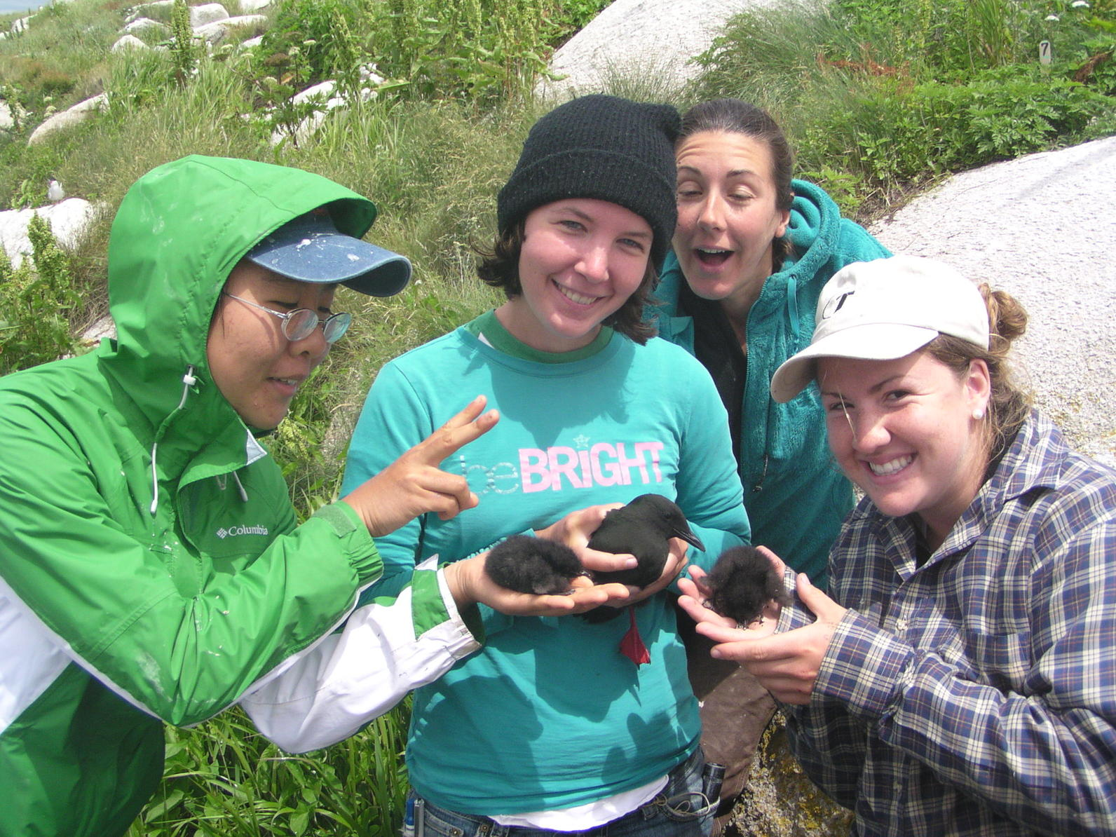 Interns with Chicks on Matinicus Rock