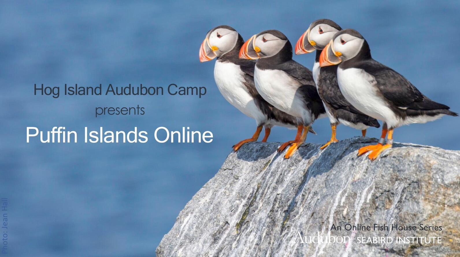 Puffin Islands online course title slide