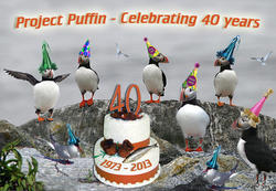 Puffins Celebrating Project Puffin's 40th Year
