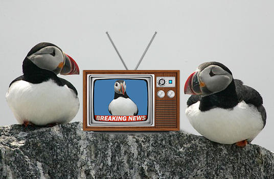 Project Puffin in the News | Audubon Project Puffin